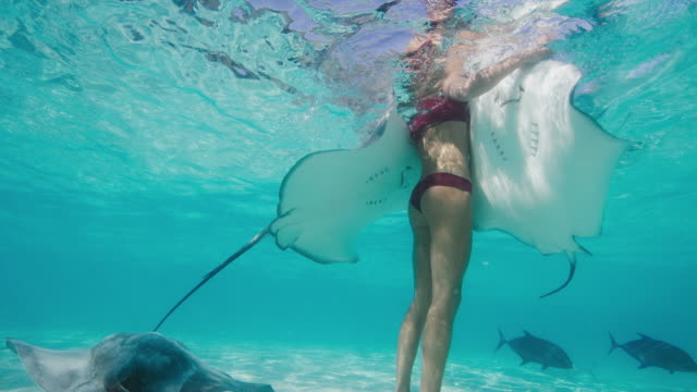 vídeos de stock e filmes b-roll de beautiful woman swimming with stingrays - uge