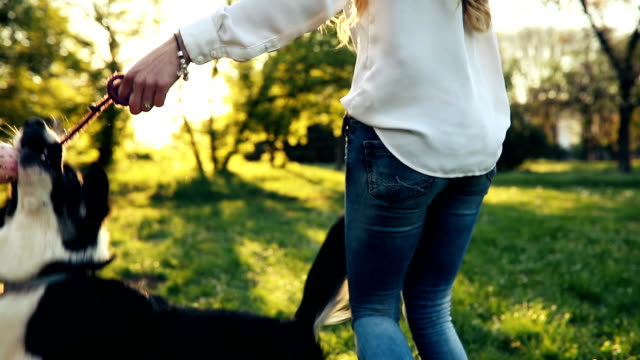 beautiful woman walking cute dog in nature - dog stock videos and b-roll footage