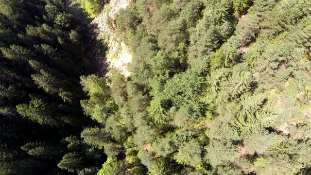 beautiful wood in mountains. Aerial top view decrease video