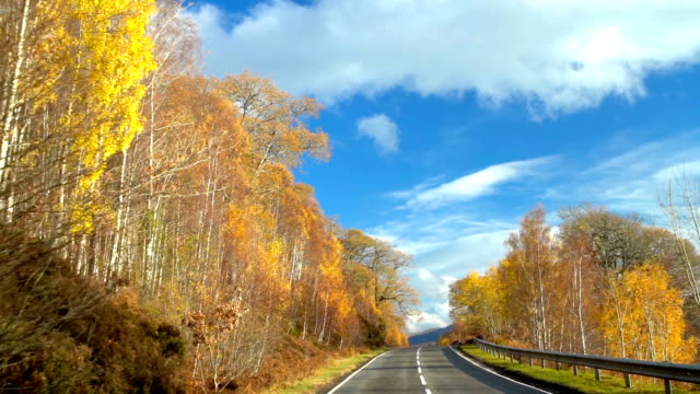 Beautiful Yellow Autumn Forest tree side of the street with against blue sky in road trip to Scotland