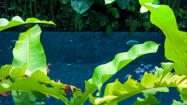 Beautiful young blond girl in black bathing suit floating in the pool. Green banana leaves plants moving and cover the view. Enjoing vacation video