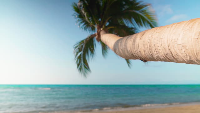 Beautiful young woman relax on tropical beach under palm tree with coconut drink Beautiful young woman relax on tropical beach under palm tree with coconut drink. Summer vacation, rest concept coconut palm tree stock videos & royalty-free footage