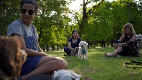 vídeos y material grabado en eventos de stock de hermosa joven mujer relajarse en un parque con amigos dueño de mascotas - un animal