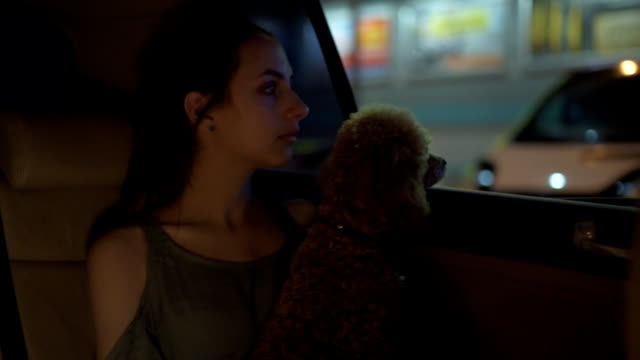 Beautiful young woman with her dog traveling in a taxi . video