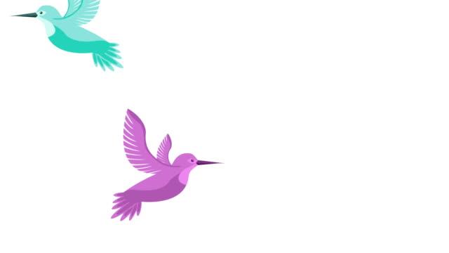 beautifull birds flying animals animation