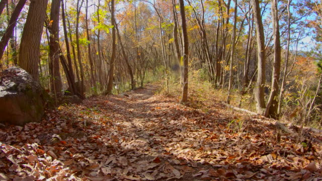 Beautifully colored leaves tree and the mountain trail of fallen leaves