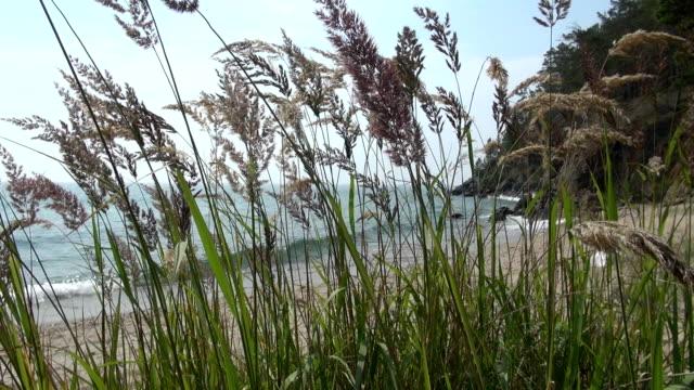 vídeos de stock e filmes b-roll de beauty baykal lake in russia during summer - lago baikal