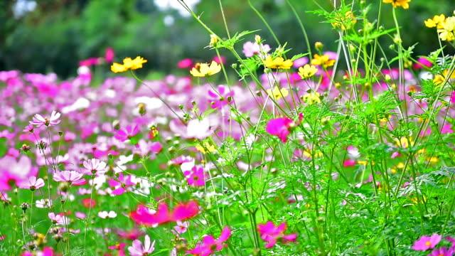 beauty flowers. beauty flowers. flowerbed stock videos & royalty-free footage
