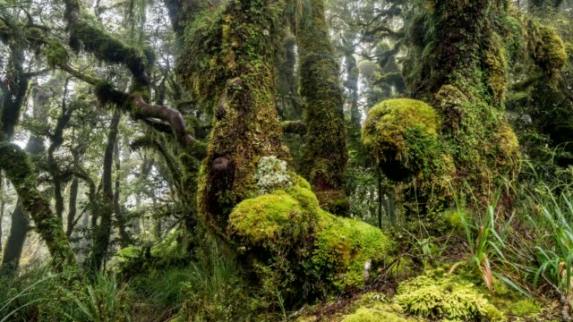 Beauty of green primeval forest nature in New Zealand mountains