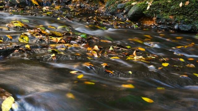la bellezza della natura incontaminata flusso di acqua fresca sulle rocce colori autunnali - cespuglio tropicale video stock e b–roll