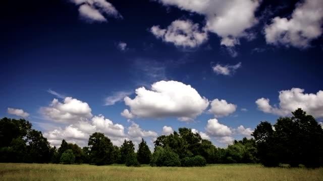 Beleza tranquila jardim - vídeo