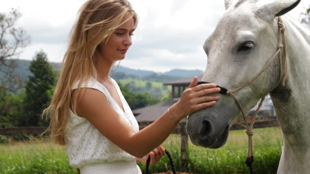 cavallo accarezzante di bellezza - 20 o più secondi video stock e b–roll