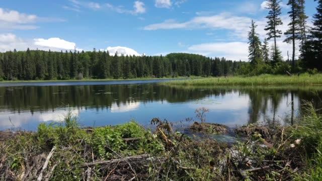 vidéos et rushes de barrage de castor sur un calme de hickey lake lapse de temps - lac reflection lake