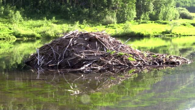 Beaver House - Vidéo