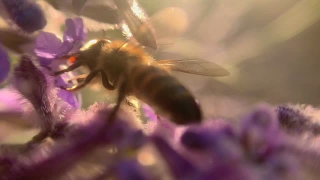 bee and flower extreme close up video of slow motion bee feasting on a flower pollen stock videos & royalty-free footage