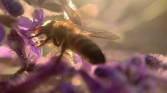 bi och blomma - pollen bildbanksvideor och videomaterial från bakom kulisserna