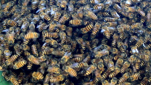 bee and honeycomb video