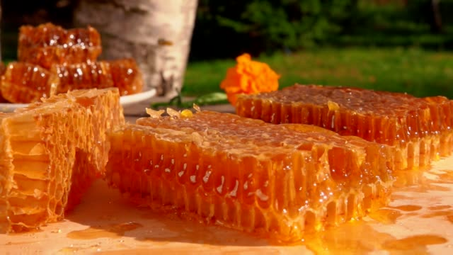 vídeos de stock e filmes b-roll de bee flies over honeycombs on a wooden table. - honeycomb