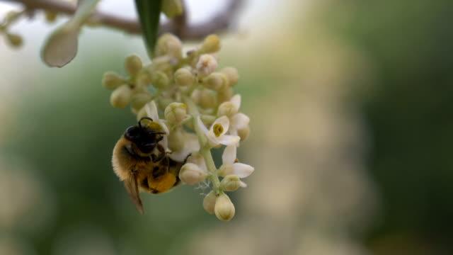 bee flower slow motion - pistillo video stock e b–roll
