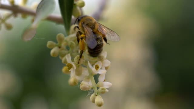 Bee Flower Slow Motion - video