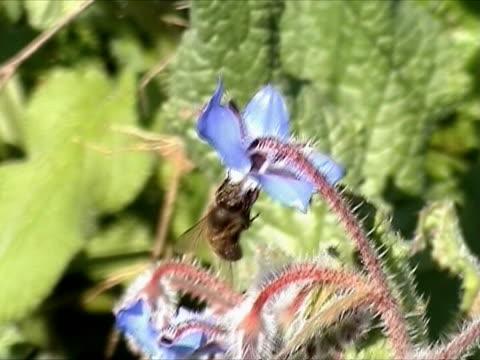 vídeos y material grabado en eventos de stock de abeja volando de flor - insecto himenóptero