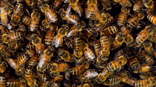 Bee Hive Macro video