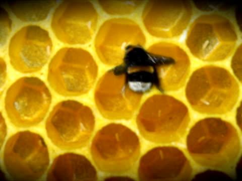 bee hive - 10 saniyeden daha kısa stok videoları ve detay görüntü çekimi