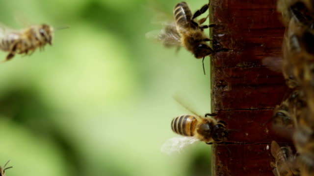 bee hive - biene stock-videos und b-roll-filmmaterial