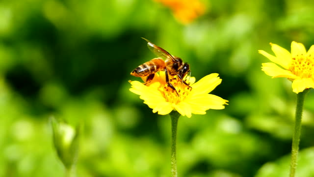 Bee in nature video