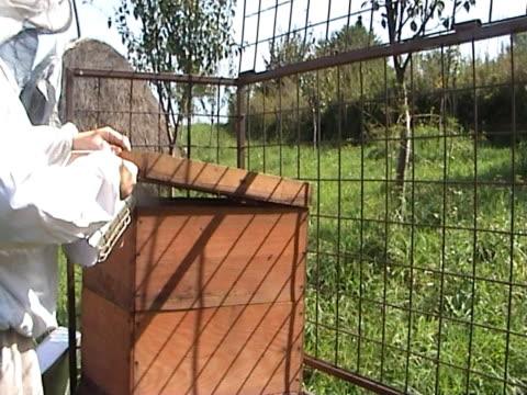 vídeos y material grabado en eventos de stock de bee keeper - insecto himenóptero