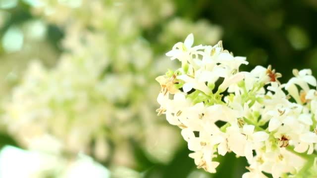 Bee Landing on Flower video