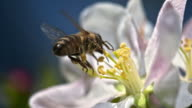 istock SLO MO bee landing on flower 482595814