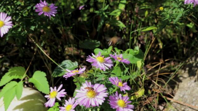stockvideo's en b-roll-footage met bee on spring flowers - arthropod