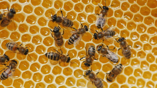vídeos de stock e filmes b-roll de bee pollen in honey processes on honeycombs - honeycomb