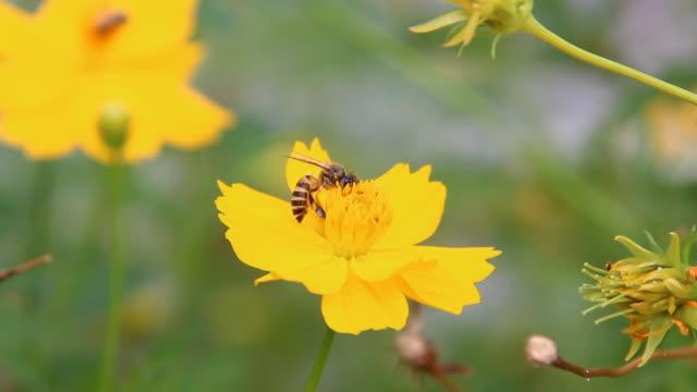 ape - ape operaia video stock e b–roll