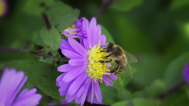 SLOW MOTION: Bee video