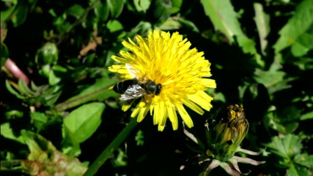 Bee Bee arthropod stock videos & royalty-free footage