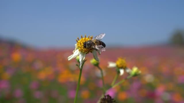 bee - pollinering bildbanksvideor och videomaterial från bakom kulisserna