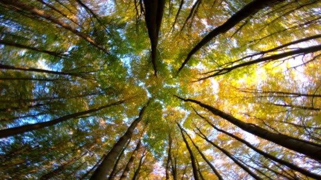 Beech forest, beech woods, fagus, rotation, turns, Buchenwald, laubwald, deciduous forest, wood, beech leaves, autumn,  Spessart, bavaria, 4K – film