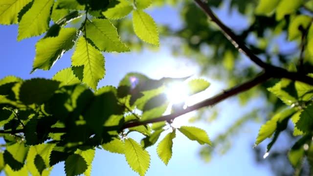 ブナやエルム - 春風景 - 紅葉 - hd - 木漏れ日点の映像素材/bロール
