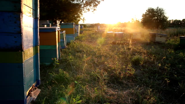Beehive at Sunset. Timelapse video