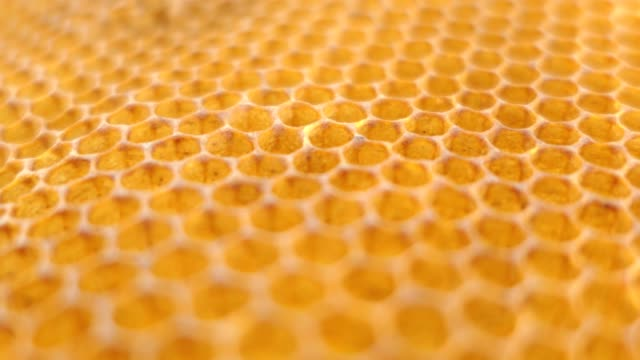 vídeos de stock e filmes b-roll de beehive, honeycomb close up - honeycomb