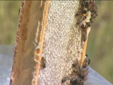 vídeos y material grabado en eventos de stock de colmena. - insecto himenóptero