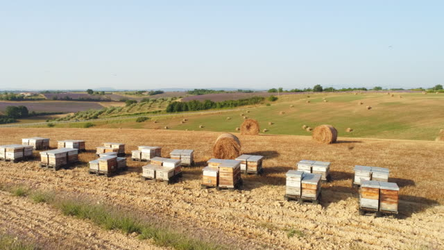 aerial beehives in the countryside of provence - alveare video stock e b–roll