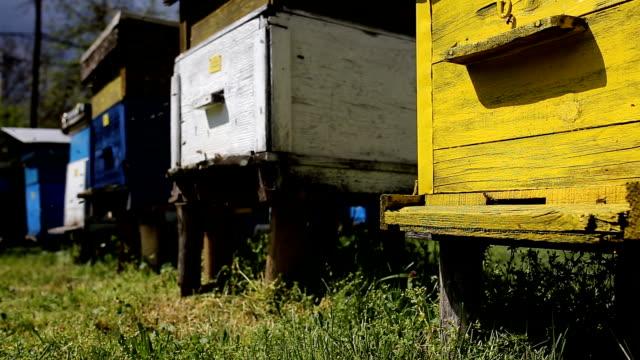 Beehives (HD) video