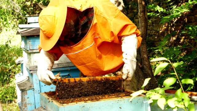 4K Beekeeper is working with bees and beehives on the apiary video