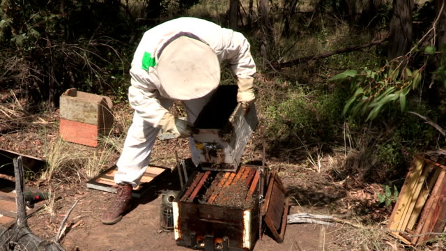 Beekeeper opening up beehive or apiary,South Africa video