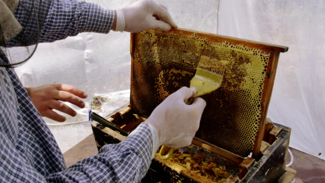 A beekeeper using a knife to cut the wax from the frame video