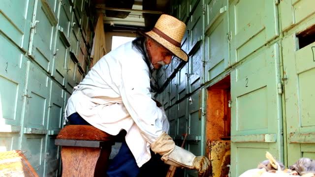 apicoltore - ape operaia video stock e b–roll
