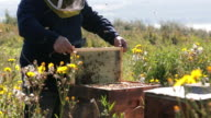 istock Beekeeper Working and Inspecting Hive 844503806